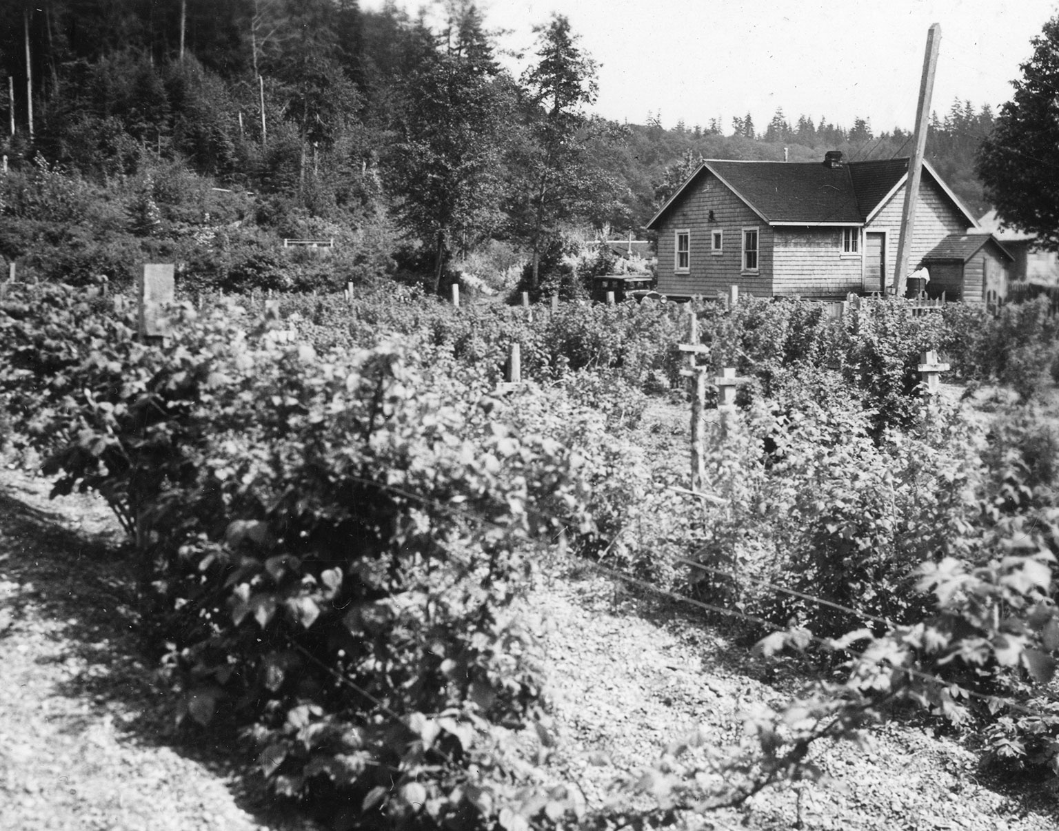 Image courtesy of the Audrey & Harry Hawthorn Library & Archives/UBC Museum of Anthropology